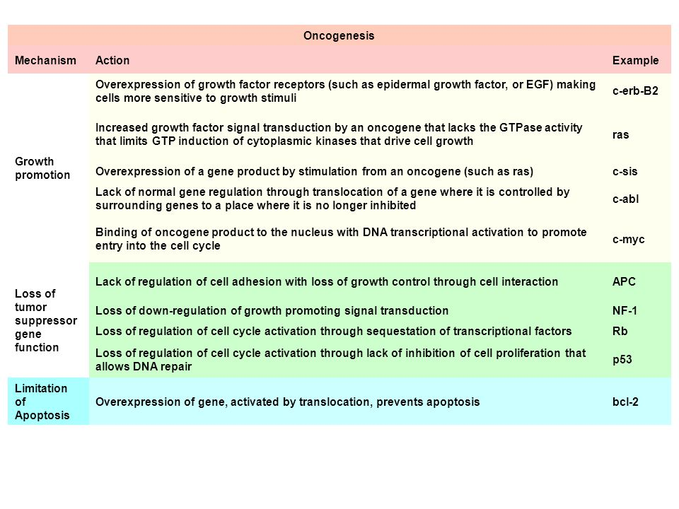 Oncogenesis Mechanism. Action. Example. Growth promotion.