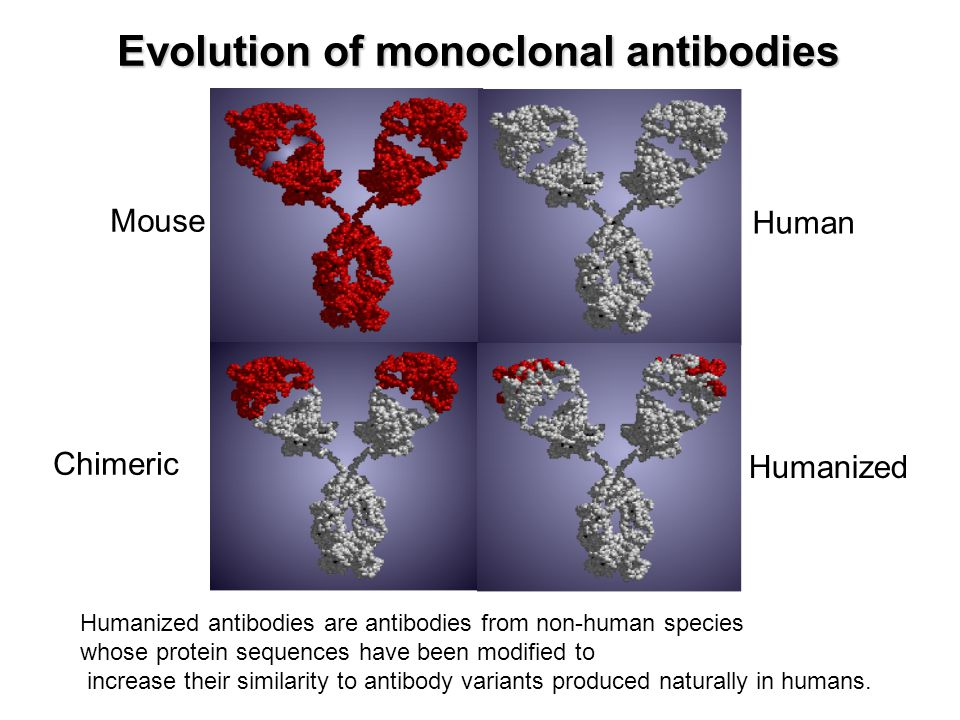 Evolution of monoclonal antibodies