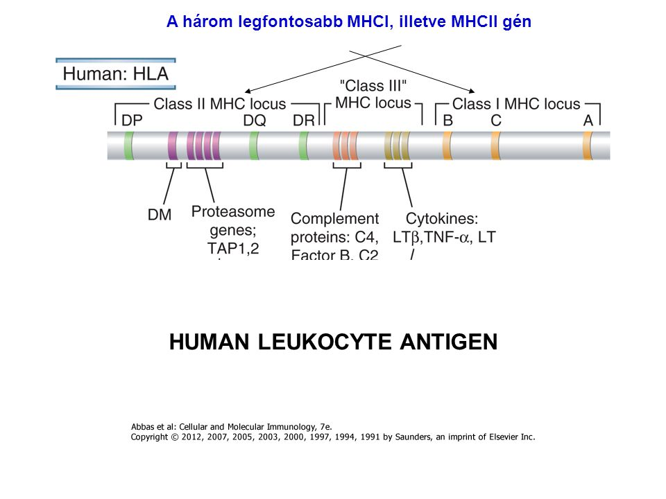 HUMAN LEUKOCYTE ANTIGEN