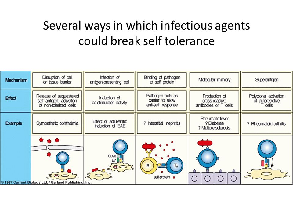 Several ways in which infectious agents could break self tolerance