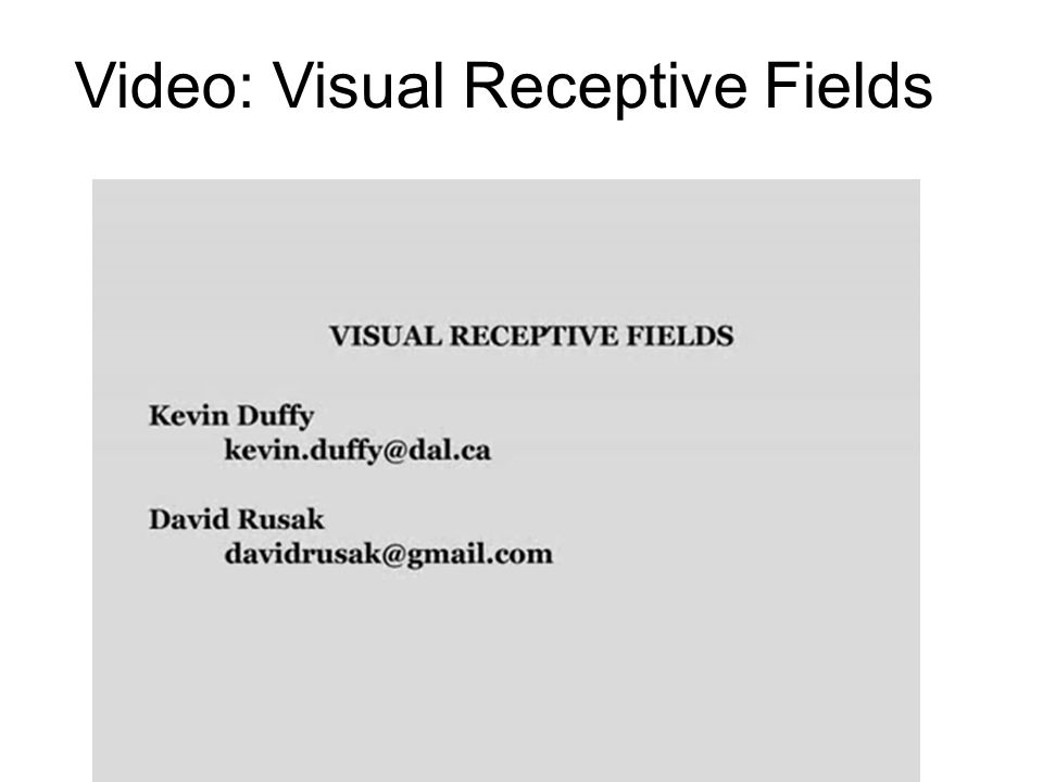 Video: Visual Receptive Fields