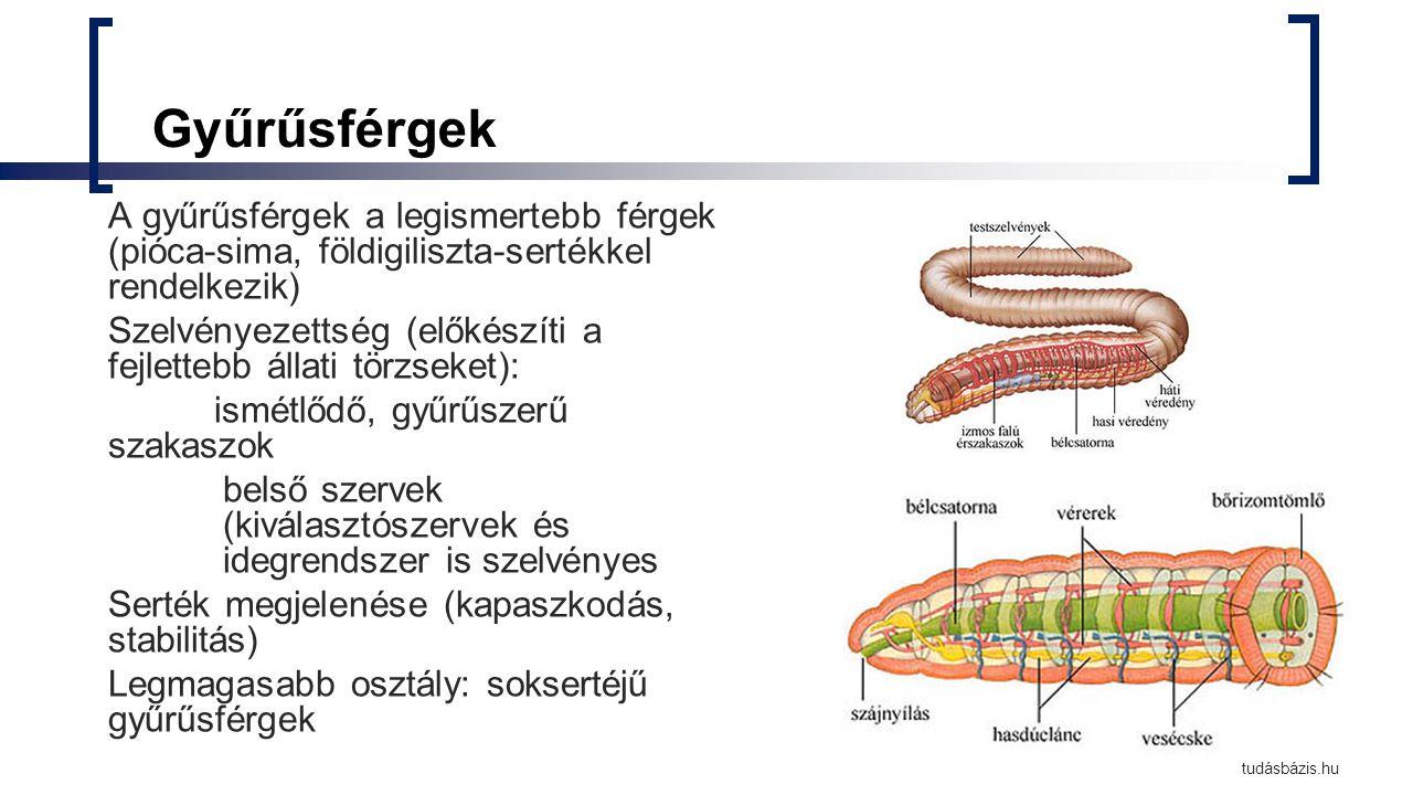 pinworm férgek gyógyszer mint a gyerekeket pillantani