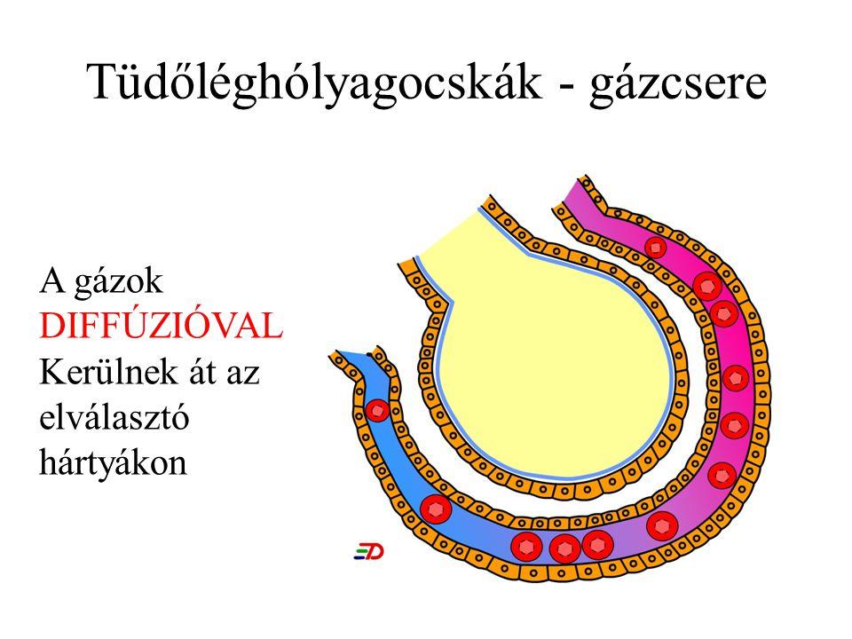 Nátrium platyhelminthes gázcsere - A laposféregek általános jellemzői