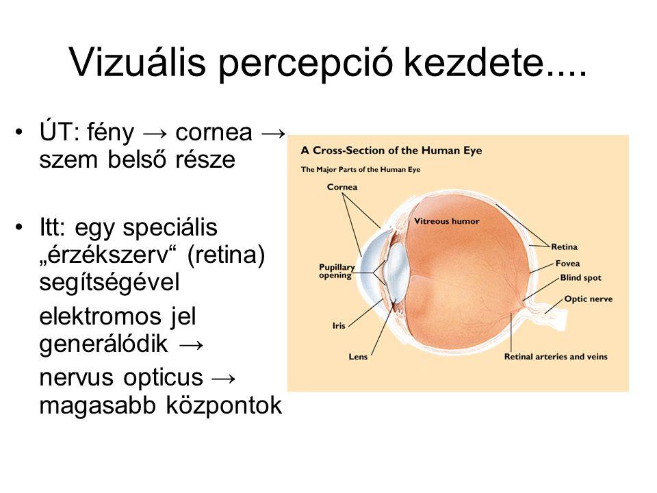 a bal szem rövidlátása